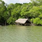 Floresta dos Guarás
