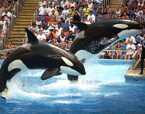 Parques SeaWorld