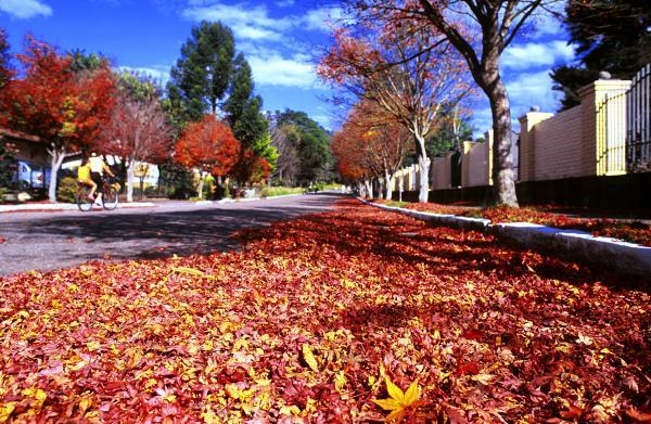 outono_em_gramado_ii