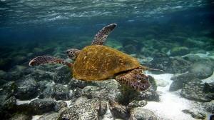 ilha da tartaruga