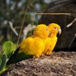 mundo mágico das aves