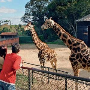 zoologico de curitiba