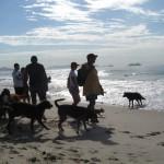 cachorros na praia do diabo
