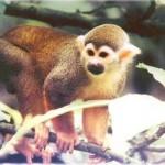 floresta amazônica macacos
