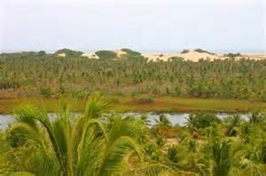 manguezal pirambu