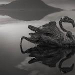 cisne petrificado