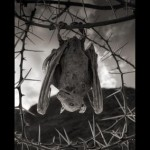 morcego petrificado