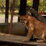Zoológico do Batalhão do Forte São Joaquim