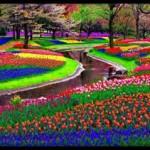 País das flores (Foto: Reprodução)