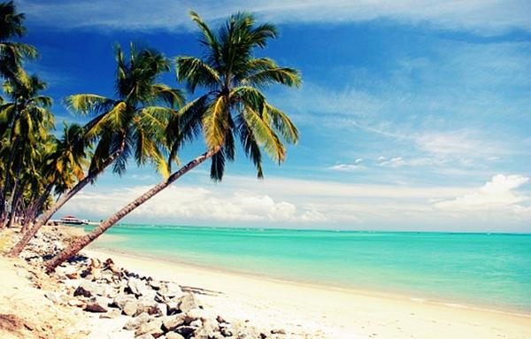 Coqueiros enfeitam a areia da praia.